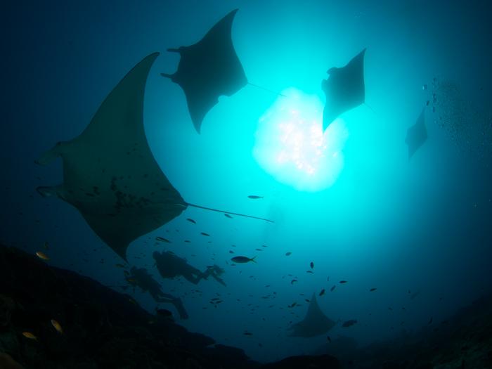 diving-maldives-addu-atoll-manta-point