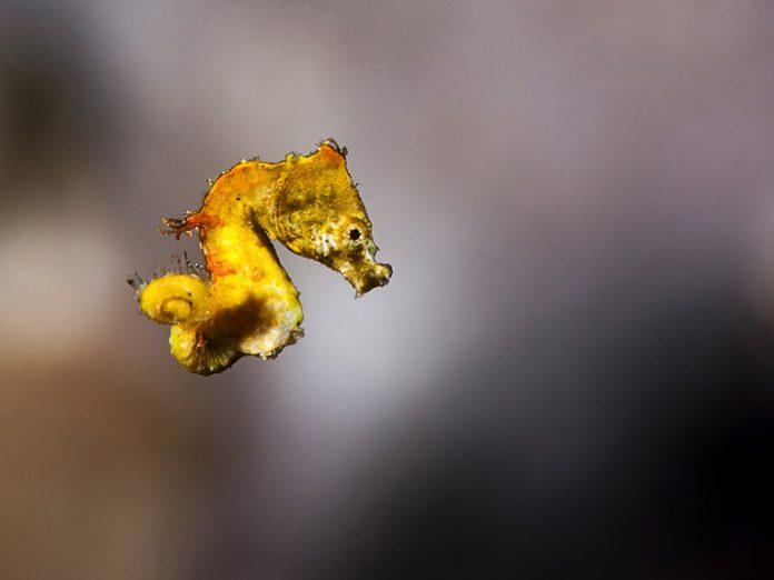underwater-photography-tips-photo-retouching-sample