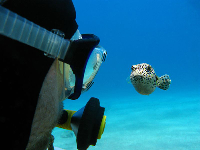 how-to-become-a-better-diver-2