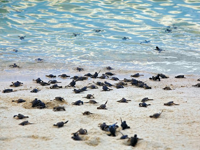 places-to-dive-with-turtles-in-asia-pacific-2