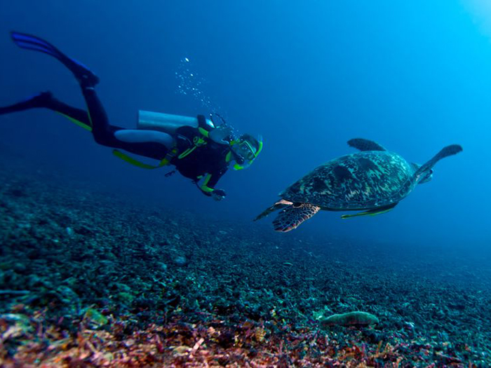 places-to-dive-with-turtles-in-asia-pacific-3
