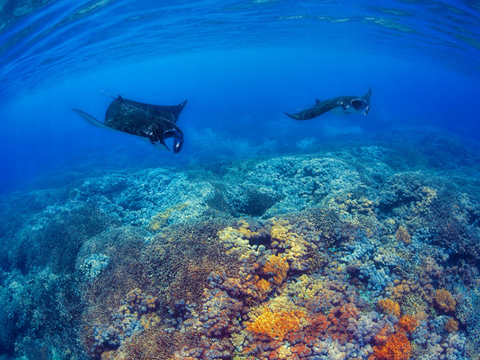 faq-what-you-need-to-know-about-diving-in-komodo-2
