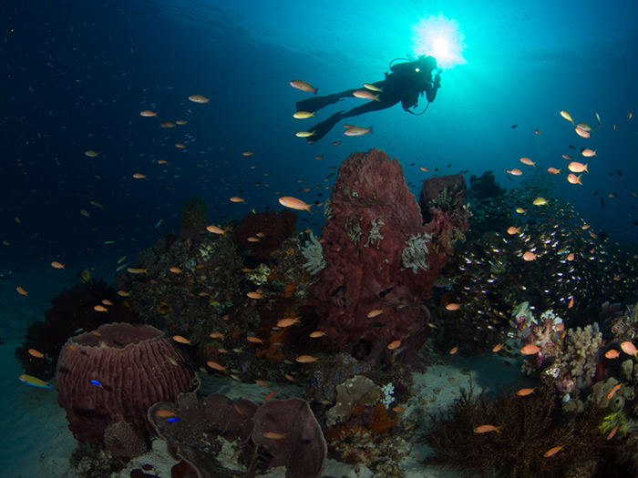 faq-what-you-need-to-know-about-diving-in-komodo-3