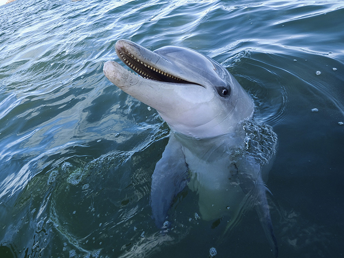 reasons-to-dive-south-australia-dolphin-rosie-leaney