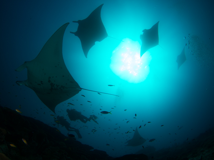 diving-maldives-addu-atoll-manta-point
