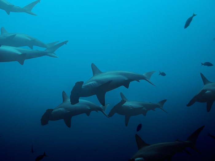 heres-where-you-can-go-to-see-your-favourite-sharks-hammerhead-shark