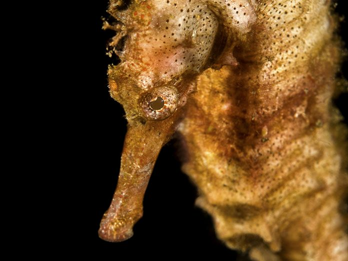 things-i-learned-at-underwater-photography-boot-camp-lembeh-seahorse-goodvis