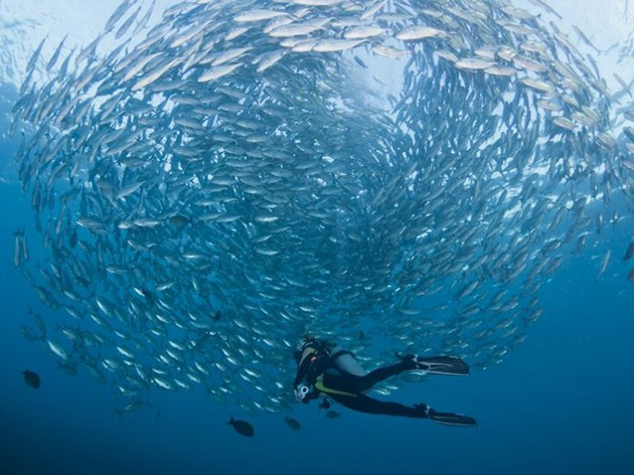 best-scuba-diving-locations-for-beginners-bali-1