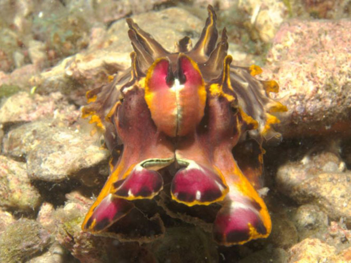 diving-malapascua-three-dive-sites-you-just-have-to-visit-luc-low-3