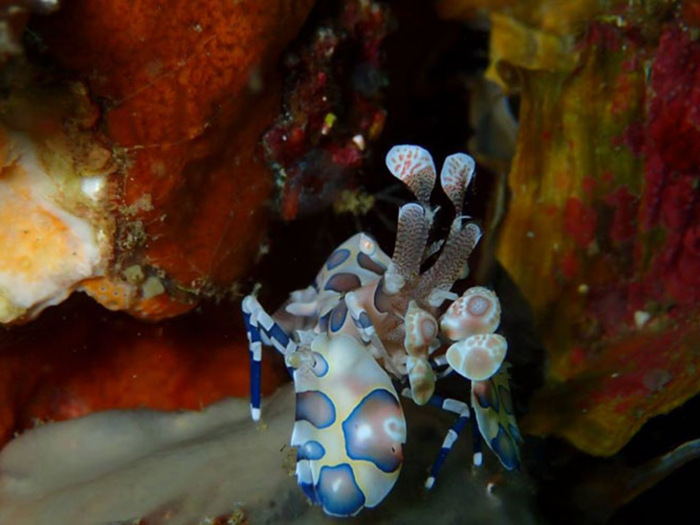 diving-malapascua-three-dive-sites-you-just-have-to-visit-luc-low-4