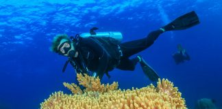 faq-what-you-need-to-know-about-diving-in-komodo